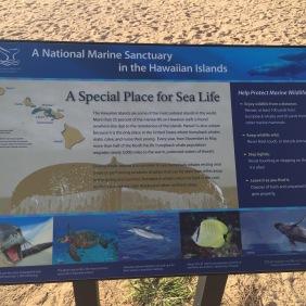 Ein Hinweisschild welche wilden Tiere man hier - im Waimea Beach Park - alles beobachten vs. treffen kann.